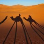 Sence v Sahari