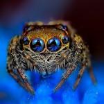 Fotografije pajkov, ki hipnotizirajo