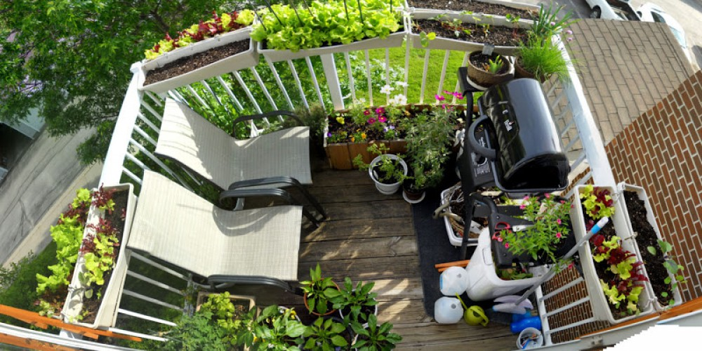 Vrt na balkonu - Sveža zelenjava in dišeča zelišča nad mestnim vrvežem  City...