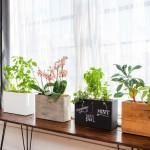 Sadilniki_foto_indoorgardener
