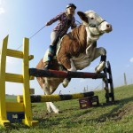 luna-jumping-cow-videojpg-ae12f05c2a4aeb29