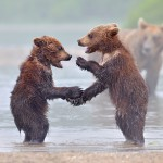 bear-photography-10