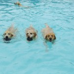 dog-pool-party-lucky-puppy-16