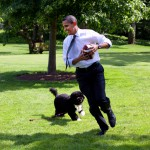 barack Obama & Bo Portugese water Dog