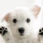 cover-dogs-7-trikov
