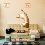 funny-jumping-cats-21__880