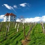 vinogradniški dvorec