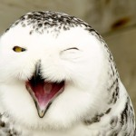 snowyowllaughing_Nemodus-photos