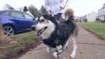 dog17n-1-web