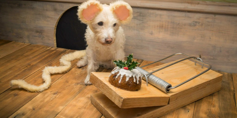 zabavne božićne čestitke Zabavne božične čestitke s psom Raggiejem v glavni vlogi  zabavne božićne čestitke