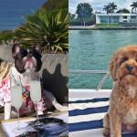 Bogati psi Instagrama (Rich Dogs of Instagram).