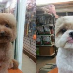 Psi z geometrijskimi pričeskami