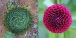 Rastline s popolno obliko