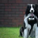 Nikon Heartography - svet skozi pasje oči