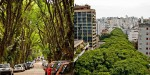 Drevored v Porto Alegru velja za najlepšo ulico na svetu.