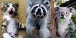 Začudeni obrazi živali