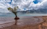Slovito osamljeno drevo pri kraju Glenorchy