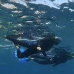 »Snorklanje« v zaščitenem območju Les Medes.