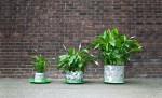 Cvetlični lonček Growth raste skupaj z rastlino