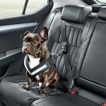 Škoda z varnostnimi dodatki za psa