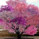 Drevo 40-ih sadežev