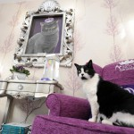 Luksuzni hotel za mačke The Ings Luxury Cat Hotel