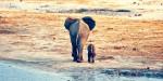 Svetovni dan slonov