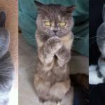 Mački, ki kujejo zaroto