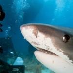Selfie z morskim psom. No, to pa je smrtonosna kombinacija.