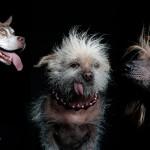 Najgrši psi na svetu