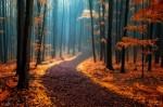 Jesensko obarvan gozd kot iz pravljice