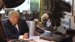 Donald Trump in beloglavi orel