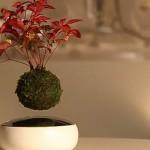 Air Bonsai omogoča lebdenje bonsaja ali katere druge rastline