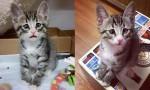 Bum, maček rojen z večno zaskrbljenim obrazom