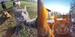 Maček Manny obožuje selfije