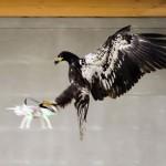 Z orli nad nelegalne drone!