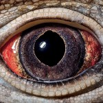 Bližnji posnetki oči živali