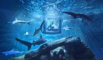 The Shark Aquarium - prva podvodna soba na spletni platformi Airbnb