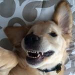 dog-braces- (2)
