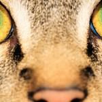 Kako svet vidijo živali?