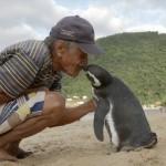 Pingvin Dindim