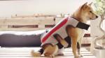 Telovnik za pasje selfije The Posting Tail