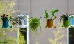 Livi: mini cvetlični lončki, ki se prisesajo na steklo