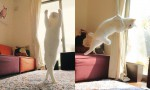 Maček, ki pleše balet
