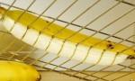 Kuhinjski trik - rezanje banane na kose