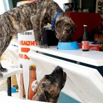 Prvi pasji bar se nahaja v Crikvenici na tamkajšnji pasji plaži.
