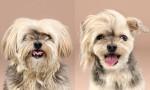 Psi, ki so si omislili bolj modno frizuro kot ti!