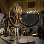 V Avstriji odkrili mamuta.