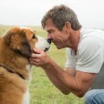 Film A Dog's Purpose (2017)