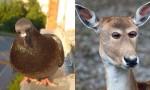 Živali s smešno pozicijo oči.